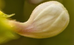 Abstract shot (@nikondxfx (instagram)) Tags: india nikon fullframe hobby nature photography abstract flowerphotography macrolens macrophotography tamronspaf90mmf28divcusdmacro tamron90mm tamron tamron90mmf28 kolkata nikond750 d5200