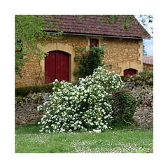 Quelque part en Périgord (Yvan LEMEUR) Tags: vieillespierres maison grange fleurs arbuste campagne extérieur périgord dordogne france terroir patrimoine
