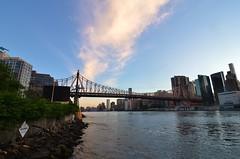 Roosevelt Island, 06.07.16 (gigi_nyc) Tags: rooseveltisland nyc newyorkcity nycskyline queensborobridge eastriver