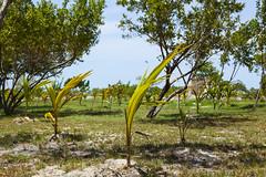 IMG_3669 (CandiceLobo) Tags: belize belizeandreams beach besttimes honeymoon travel tropical adventure happyplace beautiful ocean blue green nature getaway