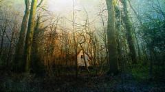 enjoy the silence (genevieve van doren) Tags: flanders westvlaanderen forest bois house maison textures