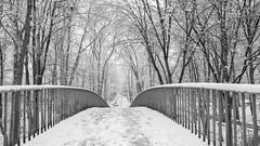 Invierno continúa (Renate Bomm) Tags: 7dwf canoneos6d ef24105mmf4l fencedfriday kälte renatebomm schnee tree weg winter zaun cold way inexplore fenced geländer bridge brücke in explore