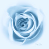 Blueprint (Inky-NL) Tags: macromondays monochrome flower rose petals roos bloem bloemblaatjes soft zacht softfocus nabewerking postprocessing highkey onecolor light licht macro closeup feelingblue hmm mm fujixt2 fuji60mmf24 square dreamy