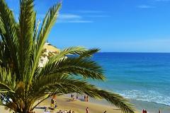 exotic (Ana_Ramona_Burbulia) Tags: oceano cielo spiaggia palma acqua verde mare benidorm paradiso