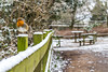 Rufford Robin (Photo_stream_this) Tags: rufford nottinghamshire robin fence snow seats table trees park
