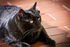First hot sun (Pepenera) Tags: cat cats c gatto gato