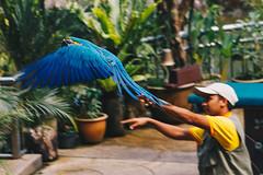 Bird Show in Kuala Lumpur (Juliano Bortolozzi) Tags: kualalumpur malaysia my birds bird park show macaw animals nature