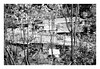 (Jordane Prestrot) Tags: jordaneprestrot film filmisnotdead analog argentique argéntico película coréedusud southkorea coreadelsur ♈ séoul seoul seúl bidonville slum chabola tree arbre árbol noiretblanc blancoynegro blackandwhite