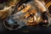 ... my souldog Boomer is watching me. (nigel_xf) Tags: boomer hund dog seelenhund augen blick eyes nikon d750 nigel nigelxf vsfototeam