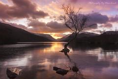 Llyn Padarn Lone Tree (marc_leach) Tags: lonetree llynpadarn llanberis snowdonia snowdon northwales lake winter landscape sunrise canon tokina1116mm manfrotto055xprob