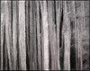 ice (nahlinse) Tags: blackwhite film ice svalbard travel filmdev:recipe=9369 fujineopanacros100 adoxadonal film:brand=fuji film:name=fujineopanacros100 film:iso=100 developer:brand=adox developer:name=adoxadonal