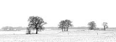 winter trees (HansHolt) Tags: winter landscape landschap panorama snow sneeuw tree trees boom bomen farm boerderij mist fog highkey blackandwhite minimal monochrome bw fluitenberg drenthe netherlands canon 6d canoneos6d canonef24105mmf4lisusm
