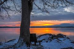 Seaside Sunrise (Jens Haggren) Tags: sea seascape sunrise morning view landscape tree water sky colours bench snow rocks clouds nacka sweden olympus em1 jenshaggren