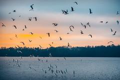 Birds | Kaunas Sea #9/365