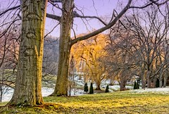 Willow in the Park #2 (otterman51) Tags: canada grimsby landscape ontario ortbaldauf park tree cold colours conifer escarpment field nature niagara niagaraescarpment ortbaldaufcom outdoors photography snow sunlight sunset wildlife willow winter