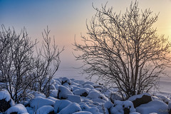 2018-01-23 SPb, Finland gulf, frost 108 (Mandir Prem) Tags: outdoor places stpetersburg brige city colour finlandgulf frost frozen horizon ice landscape nature postcard russia saintpetersburg snow sunset travel tree winter