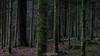 ˈfôrəst ˈentər ˈeksit (Emanuel D. Photography) Tags: forest nature tree woodland outdoors landscape scenics greencolor beautyinnature wildernessarea summer nopeople leaf pinetree plant treetrunk environment tranquilscene season moss