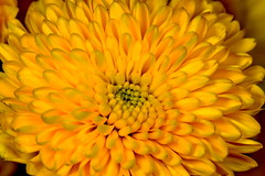 Flower Power (Darts5) Tags: flower flowers plant 7d2 7dmarkll 7dmarkii 7d2canon ef100l closeup canon7d2 canon7dmarkll canon7dmarkii canon canonef100l macro macros upclose