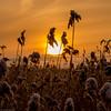 Blind Sun (Jesse Väisänen) Tags: wallpaper landscape nature canon dslr canonefs1855mmf3556 minimalistic minimalist sun sunset sky orange yellow field snow winter suomi finland atmosphere atmospheric