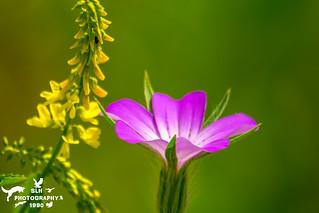 Spring Wildflower Meadow