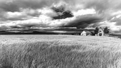 ile-265 (Tasmanian58) Tags: zeiss batis18 batis sony a7ii orleansisland quebec canada barley wheat house clouds sky wind storm bw blackandwhite noiretblanc nb