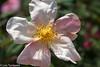 In the Rose Garden - HMM