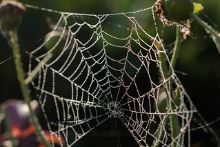 Natures Wicked Web.