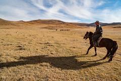 41660-012: Water Point and Extension Station Establishment for Poor Herding Families in Mongolia (Asian Development Bank) Tags: mongolia mng uvurkhangai 41660 41660012 mongolian man herder horse animal laboranimal farmanimal herd herdingactivities trade livelihood stable rural province