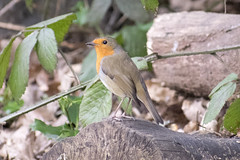 """robin180218 • <a style=""""font-size:0.8em;"""" href=""""http://www.flickr.com/photos/157241634@N04/39447188345/"""" target=""""_blank"""">View on Flickr</a>"""