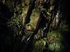Sunlight hits the Rocks - Benmore Botanic Gardens Feb 2018 (GOR44Photographic@Gmail.com) Tags: rocks benmore botanicgardens gor44 green fern sunlight winter argyll scotland cowal panasonic olympus omdem5 45150mmf456