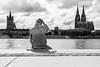 4321 (.niraw) Tags: köln rheinpromenade kölnerdom grosstmartin rheinauhafen freitreppe skyline wasser strasenfotografie mann bw schiffe wolken bäume handtuch aussicht