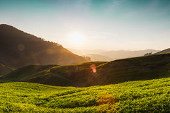 Sunrise over Sungai Palas tea plantation in Cameron Highlands, Pahang, Malaysia (Patrick Foto ;)) Tags: agriculture asia asian background beauty beverage bush cameron ceylon countryside cultivation drink famous farm farmland field flora foliage forest garden green grow growth harvest harvesting herb herbal highland hill idyllic india industry land landscape malaysia meadow mountain nature nobody organic outdoor place plant plantation rural south sunny tea terrace texture tropical valley tanahrata pahang my