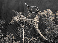 Like a Deer in a Flash (Light) (Steve Taylor (Photography)) Tags: animal sculpture monocolor monocolour wood wooden bush tree plants flowerdome gardensbythebay
