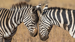 Nairobi-Nationalpark-0307 (ovg2012) Tags: kenia kenya nairobi nairobinationalpark