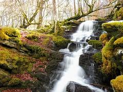 Moness Glen. (Flyingpast) Tags: waterfall wet nature outdoors walk perthshire highland scotland scottish stream creek torrent rocks aberfeldy cascade pretty beautiful woods glen moss tree winter