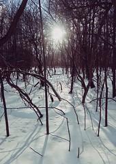 Gray's Creek Conservation Area (Richard Pilon) Tags: nature naturetrail winter grayscreek conservationarea grayscreekconservationarea canon ontario powershot snow
