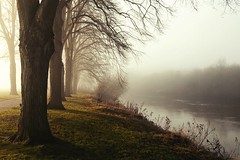 Foggy start on the River Severn (Macro light) Tags: fog winter sunshine morning riversevern worcester limetrees racecourse