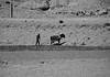 Back to Nature - Tibet Style (Harald Philipp) Tags: horse plow tibet china autonomousregion communism amish agriculture primitive farming
