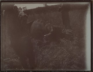A fallen rhinoceros at camp Kampi ya faru nne, near Tana river in June 1910. ; Photograph 2.