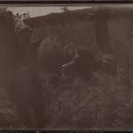 A fallen rhinoceros at camp Kampi ya faru nne, near Tana river in June 1910. ; Photograph 2. thumbnail