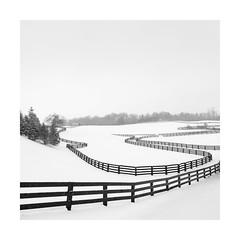 Horse Farm II (Sandra Herber) Tags: ontario toronto winter