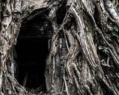 Angkor   |   Ta Prohm (JB_1984) Tags: taprohm temple ruin decay tree root tetrameles texture light shadow face carving templesofangkor khmer siemreap krongsiemreap cambodia cambodge kampuchea nikon d500 nikond500