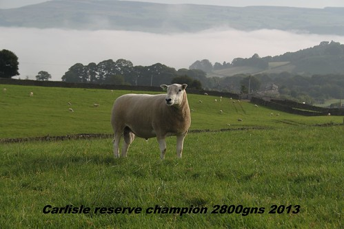6.Reserve Carlisle champion 2800gns 2013