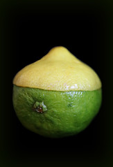 2018 Sydney: Lemon-Lime (dominotic) Tags: 2018 fruit citrusfruit yellow green macromondays citrus lemonlime blackbackground sydney australia