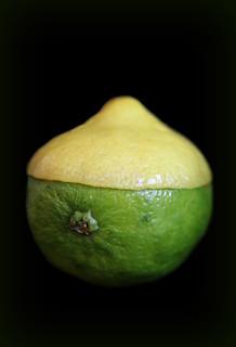 2018 Sydney: Lemon-Lime
