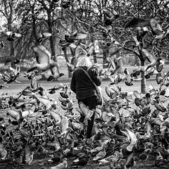 Pájaros en la cabeza (una cierta mirada) Tags: birds woman bnw blackandwhite horror hitchcock london park bird birdwatching birdphotography birding scary creepy bw monochrome blackandwhitephotography monoart