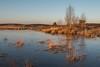 Kalmthoutse Heide (BE) (de_frakke) Tags: kalmthout belgium landschap landscape cold