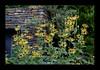 Duke Gardens July 2015 9.31.40 PM (LaPajamas) Tags: nc flora dukegardens gardens