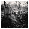 Wire (bigtalljohn) Tags: hasselblad 503cx ilford ilfordphoto invernessshire beauly panf ishootfilm ibelieveinfilm