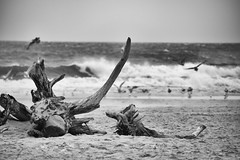 Image of comfortable view (navarrodave80) Tags: monochrome blackwhite mono beach beachscape sea baltic balticsea seascape shore shoreline horizonoversea root sand birds wave poland polska ustka davechmiel chmiel nikon d3300